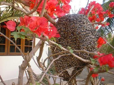 Honeycombpct60_2